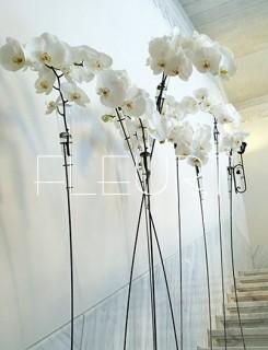 Bókoló virágállvány fiolával